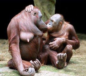 обезьяны-300