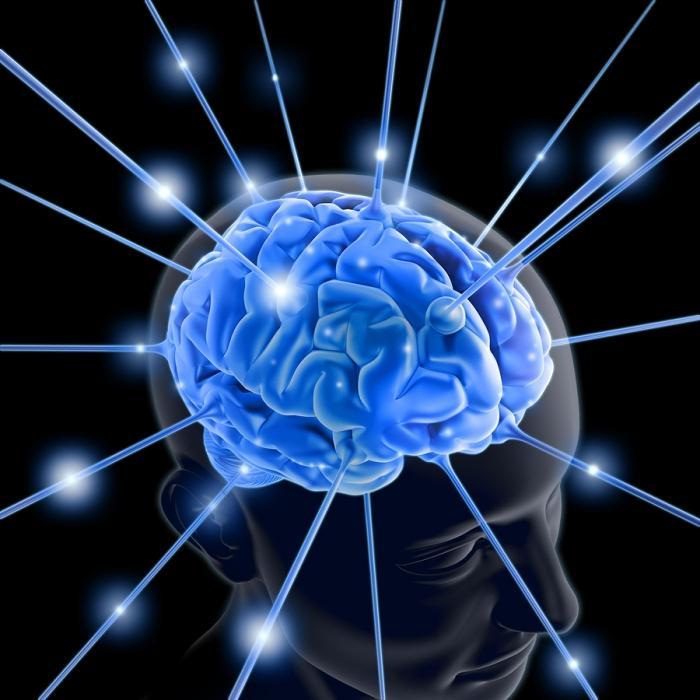 Мозг -03